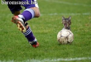 macsek a labda mögött