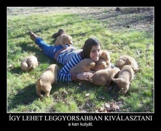 kan kutya
