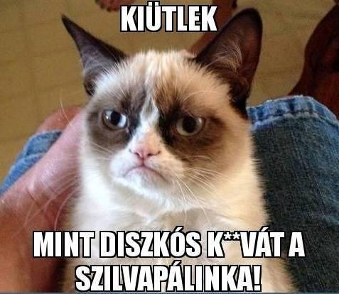 kemény cica