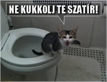 A cica magánélete