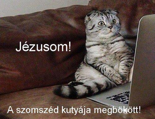 Bökj... :)