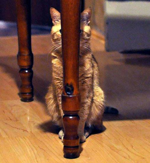 Bújócska, okos macska