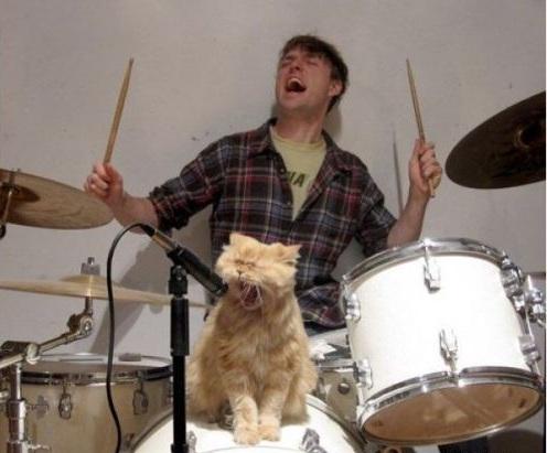 macska zene